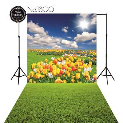 Backdrop 1800